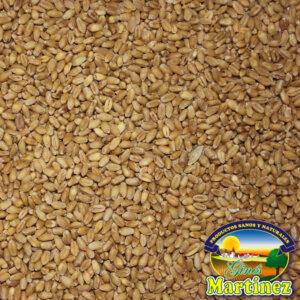 trigo blando
